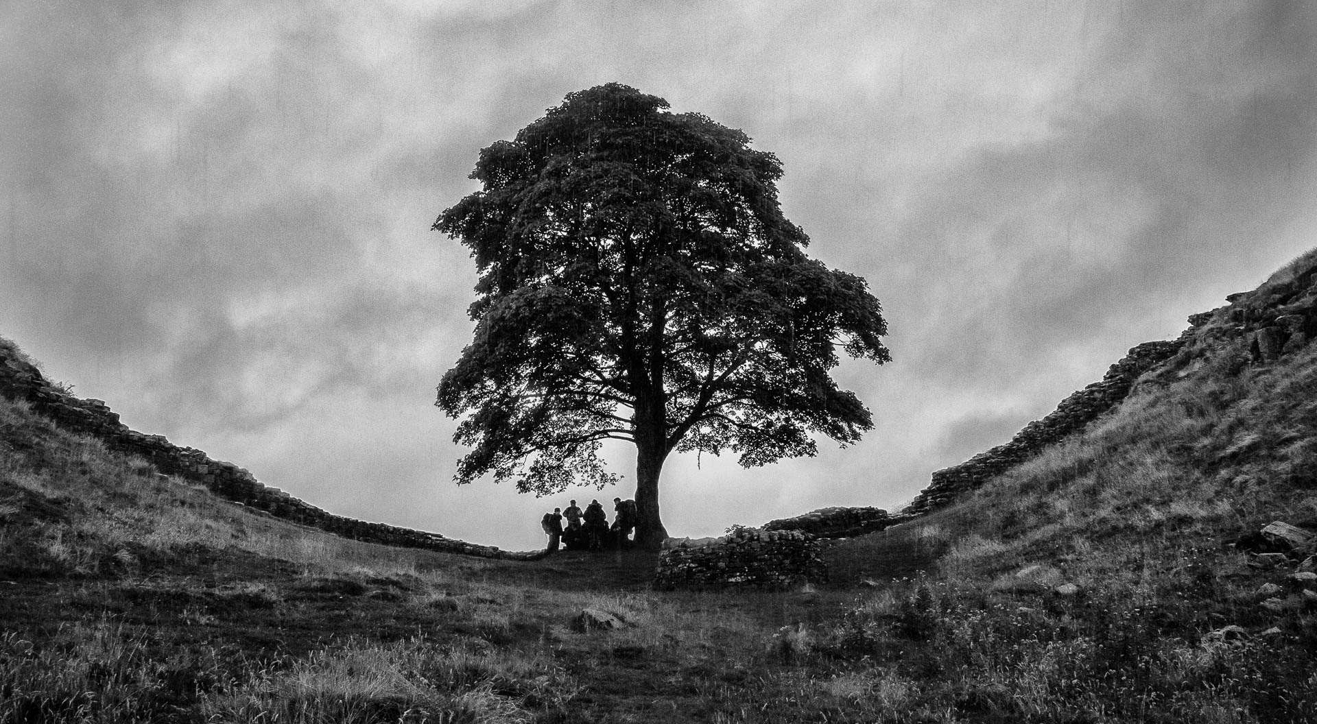 shelter-at-sycamore-gap-slider